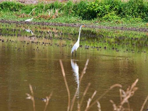 Vermilion Birding Loop